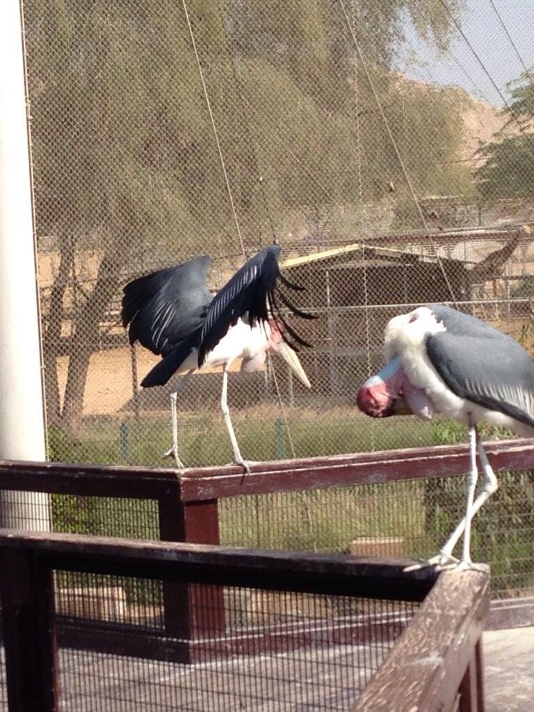 Zoologisk Have i Abu Dhabi